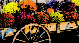 The Mums Are Coming! September 21 – October 4